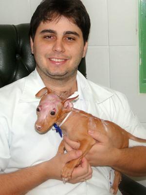O veterinário Danilo Testa e o pit bull queimado com óleo em SP (Foto: Arquivo pessoal)