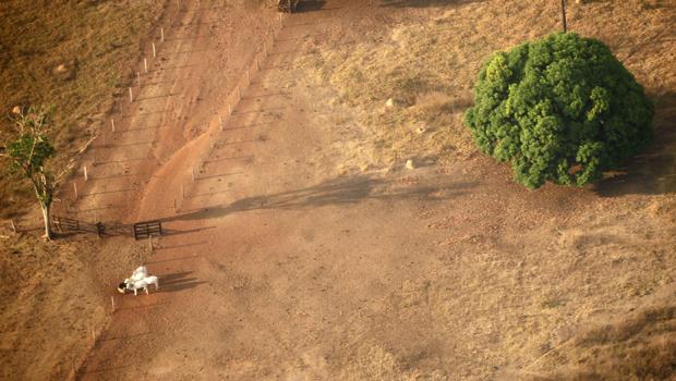 Redenção, cidade do Pará, perdeu grande parte da cobertura vegetal por conta da atividade Pecuária. A cidade tem registrado focos de queimada neste mês em áreas preservadas devido à estiagem. Outras cidades paraenses (Altamira, Novo Progresso e São Félix  (Foto: Paulo Whitaker/Reuters)