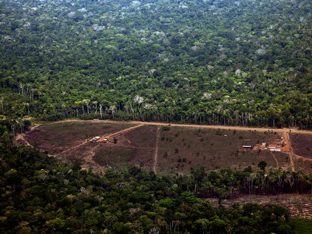Desmatamento em Porto Velho, Rondônia (Foto: Divulgação/Greenpeace/Marizilda Cruppe/EVE)
