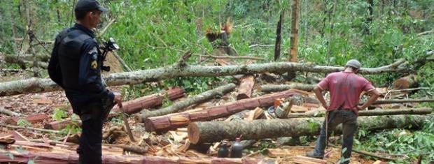 Cerca de 3 quilômetros foram devastados, conforme a PM (Foto: Uasley Werneck/ Agência da Notícia)