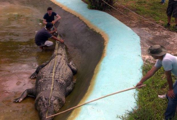 Lolong  foi medido pelo zoologista australiano Adam Britton e tem exatos  6,187 metros. 3765817d80