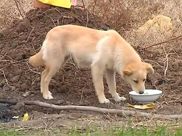 Cão tem chamado atenção por ficar guardando o túmulo de seu dono. (Foto: Reprodução/YouTube)
