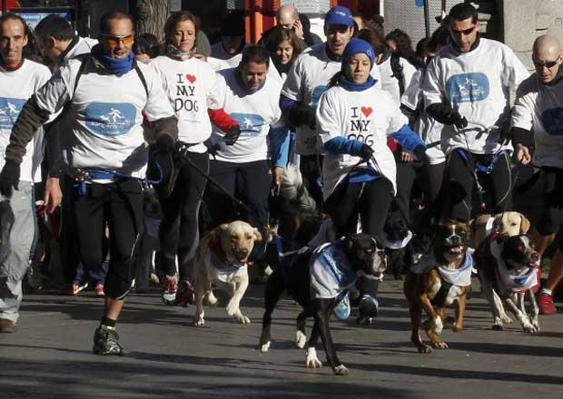 Madri realiza versão canina da corrida de São Silvestre (Foto: Andrea Comas/Reuters)