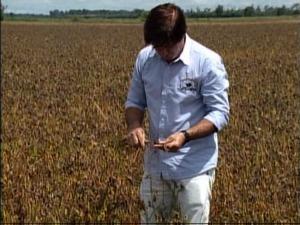 Barei, em Sinop, espera colheita da soja para plantar milho (Foto: Reprodução/TVCA)