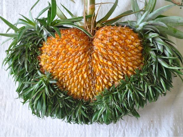 Assentado colhe abacaxi em forma de coração em MS (Foto: Felipe Bastos/G1 MS)