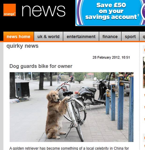 'Li Li' fica de guarda protegendo a bicicleta do dono. (Foto: Reprodução)