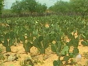 seca na bahia (Foto: Reprodução/TV Bahia)