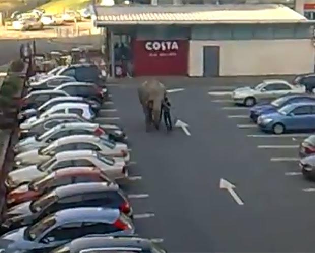 Elefante fugiu de circo e vagou em estacionamento. (Foto: Reprodução)
