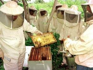 produção de mel (Foto: Assessoria/ Empaer-MT)
