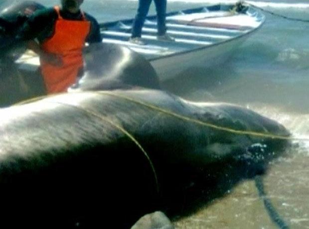 Homens admitiram que sentiram medo ao deparar-se com o tubarão (Foto: BBC)