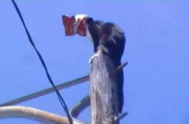 Gato é resgatado após ficar preso no alto de poste com saco na cabeça