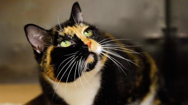 Gato (Foto: Reprodução)