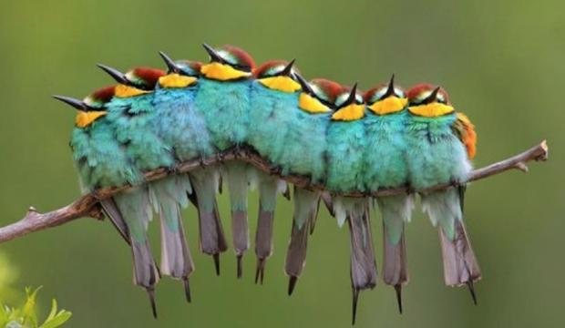 Sequência de pássaros cria ilusão de que são uma lagarta (Foto  Reprodução   José 31069ec4a0