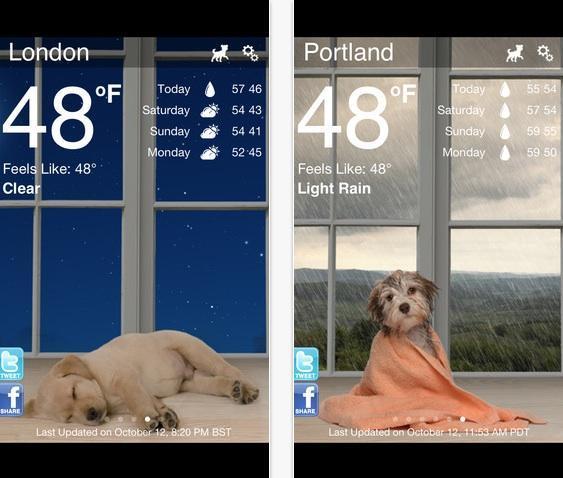 Visualize a previsão do tempo com belas fotos temáticas com o Weather Puppy (Foto: Reprodução/ Google Play)